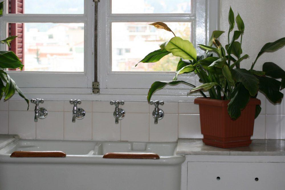 planten voor in de keuken