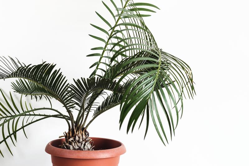 kamerplanten die weinig water nodig hebben