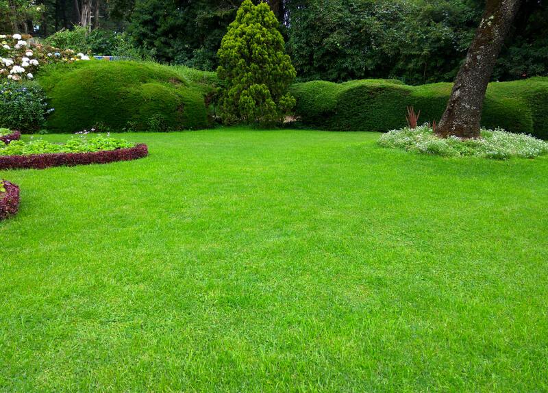 voordelen van normaal gras ten opzichte van kunstgras