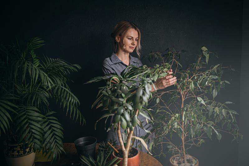 planten die sfeer geven aan je huis