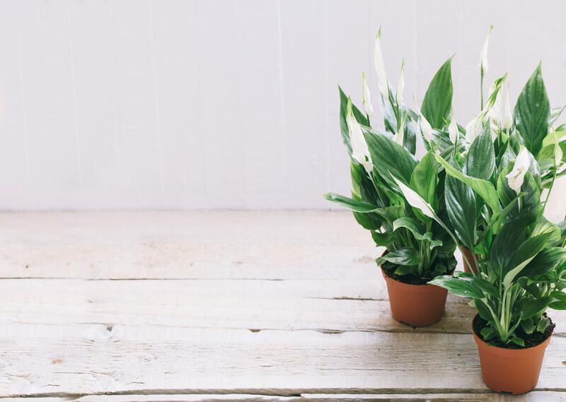 badkamer-planten