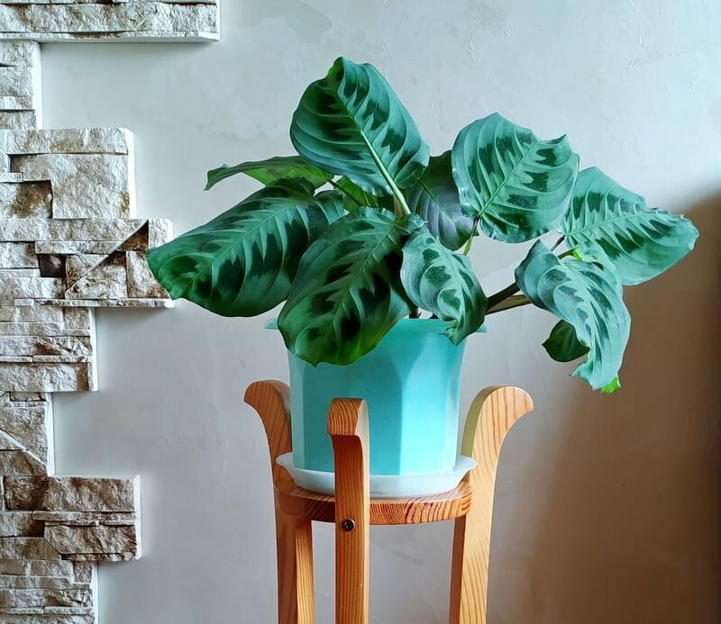 planten-in-de-badkamer