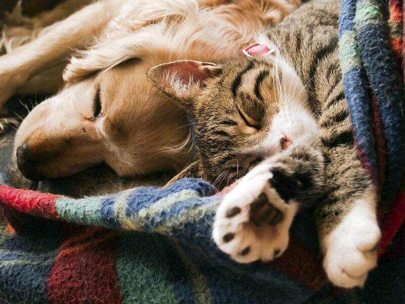 dieren verzekering
