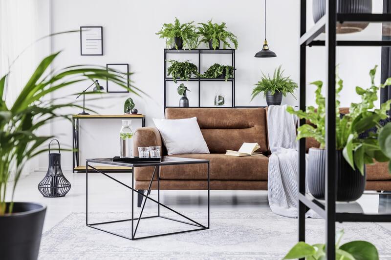 kamerplanten in de woonkamer