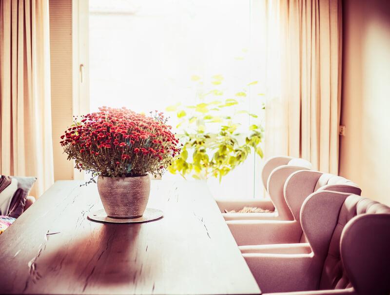 kamerplanten voor sfeer