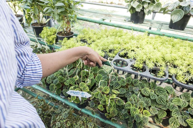 een gezonde plant uitkiezen in de winkel