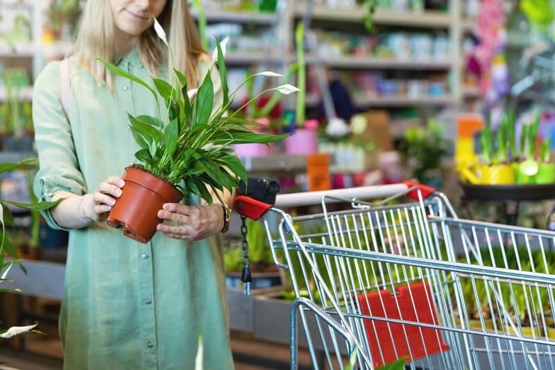zo kies je een gezonde plant in de winkel