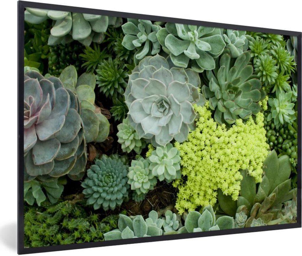Foto van kleurrijke botanische succulenten