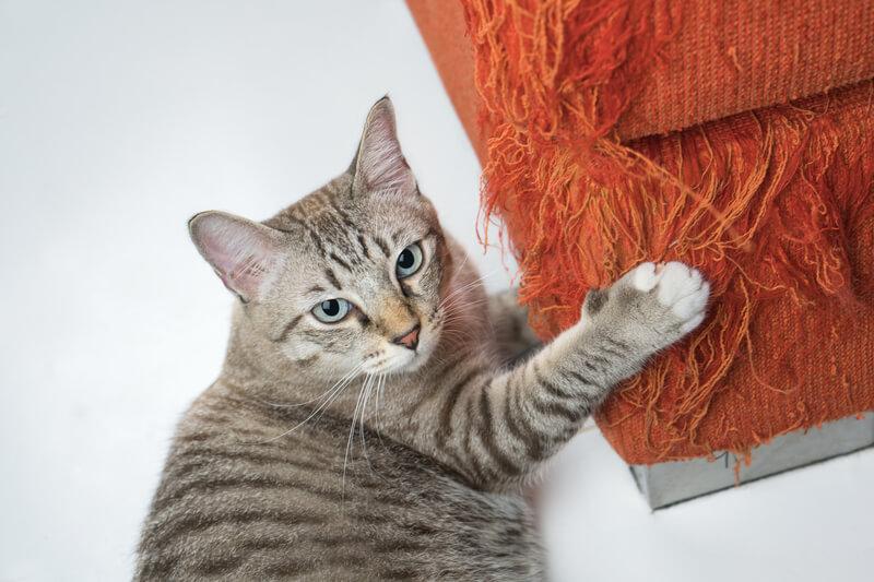 Kat krabt aan bank